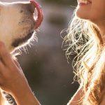 negocios para trabajar desde casa con mascotas